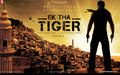 Ek Tha Tiger 3