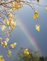 Golden Rainbow - photography photo