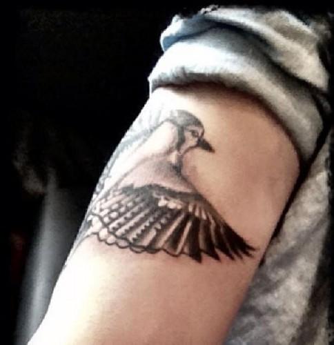 eichelhäher, jay McGuiness Tattoo