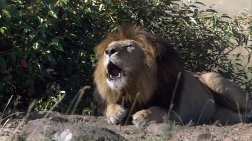 Kali roaring