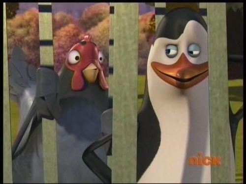 पेंग्विन्स ऑफ मॅडगास्कर वॉलपेपर called Kowalski has $WAG!