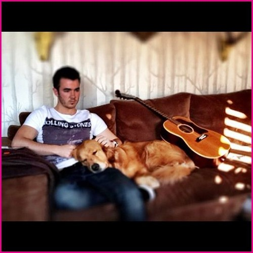 Nick Jonas karatasi la kupamba ukuta possibly with a living room titled Nick Jonas's Dog Elvis