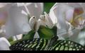 Praying Mantis Wallpapers collection - praying-mantises wallpaper