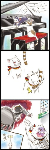 Run Prussia-cat!!!  - hetalia Photo