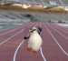 Skipper's Run! - penguins-of-madagascar icon