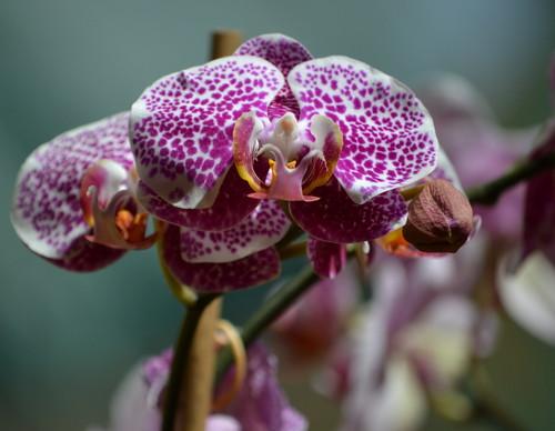 Spot flor