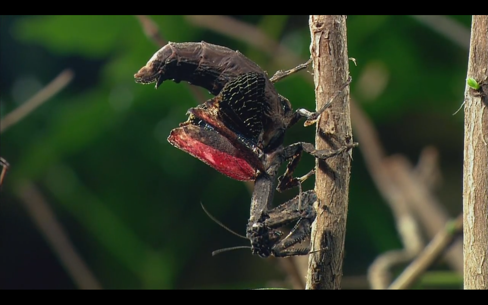 смотреть онлайн документальные фильмы про насекомых