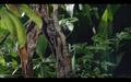 mantids in rainforest