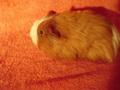 my baby g-pigs