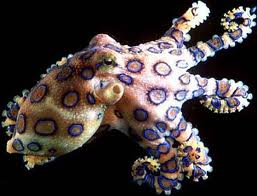 color changing octopus