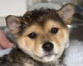 photos of pups!
