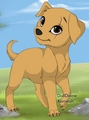 (From my story) Sarah the golden retriver