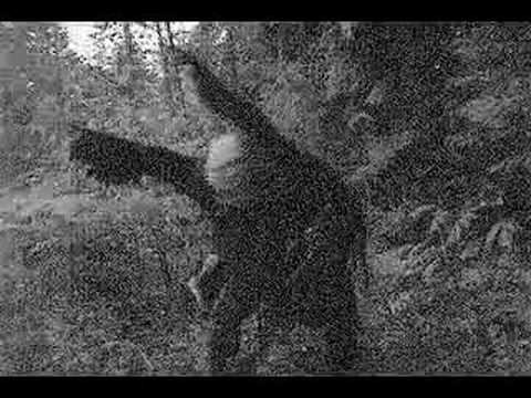 Batsquatch.1 - cryptozoology Photo