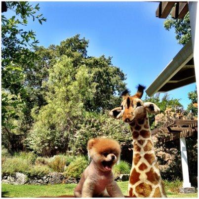 Boo & Giraffe :)