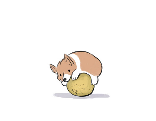 Dogs wallpaper called Corgi Hugging a Cantaloupe