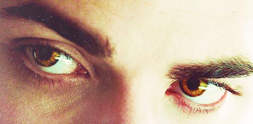 Twilight Saga..ღ