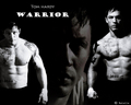 Warrior - tom-hardy wallpaper