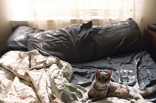 beautiful - beautiful-pictures Photo