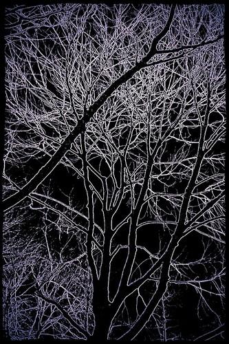 Gô tích trees