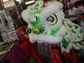 green chinese dragon - dragons photo