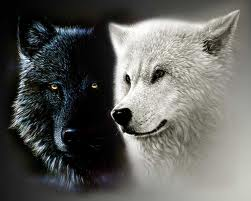the descendants of the great alpha wolf images me with my mate art