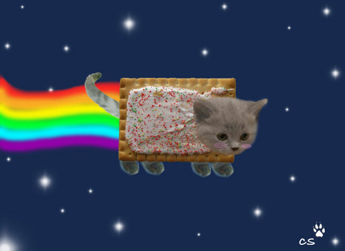 Nyan Cat Hintergrund called nyan cat real :O