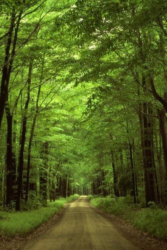 árbol lined path