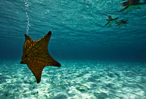 Underwater photography images underwater wallpaper and background underwater photography images underwater wallpaper and background photos publicscrutiny Image collections
