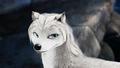 white kate