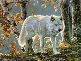 loup in forest