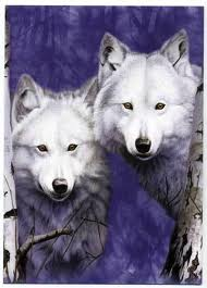 волк twins