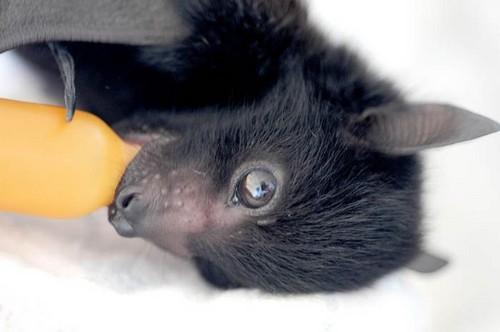 Baby bat!!!