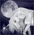Under The Moon - unicorns photo