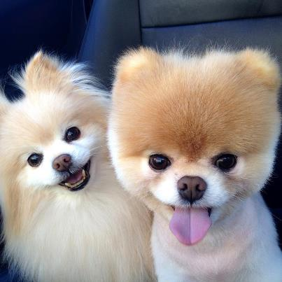 Boo & Buddy - Big Smile!!! :)