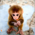Cute Monkey! - monkeys photo