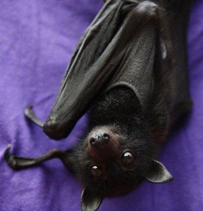 Cute bat!