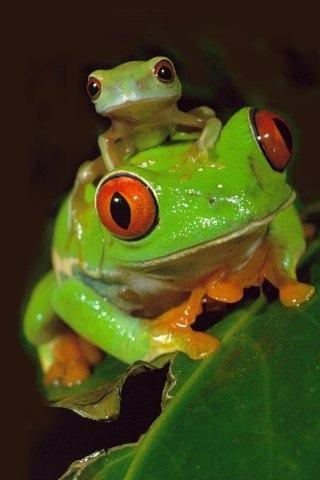 Cute frogs!