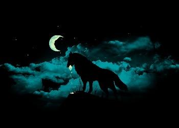 Dark भेड़िया वॉलपेपर