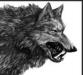 Dire Wolf - dire-wolf photo