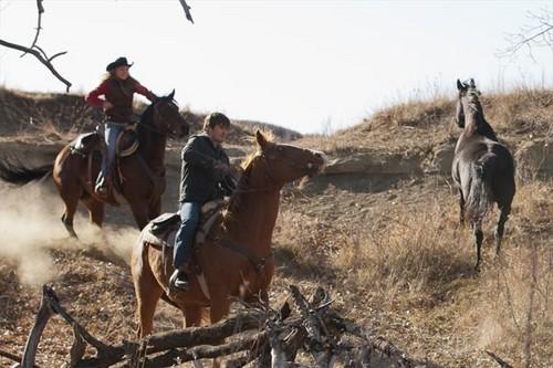 Episode 516 - Wild caballos