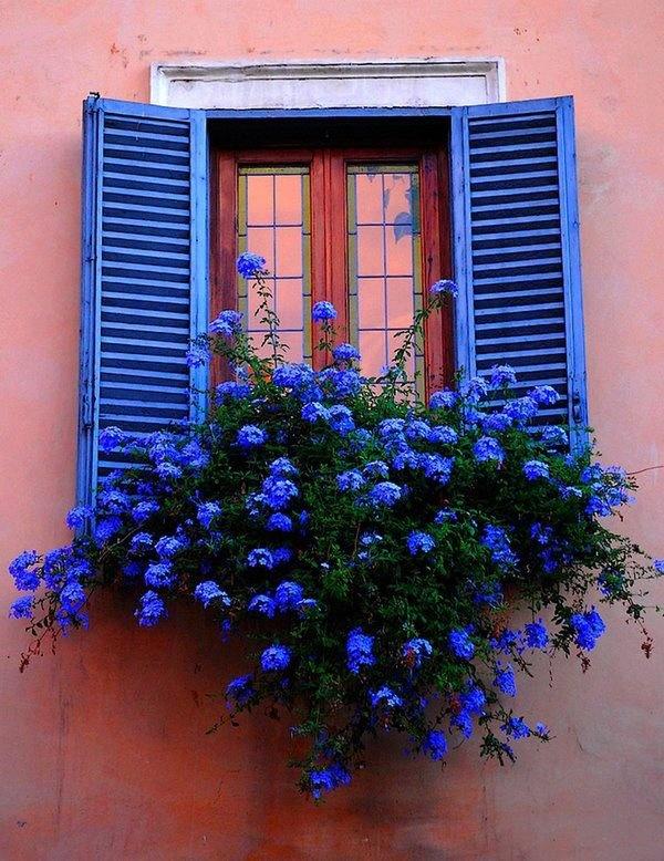 Фото красивых окон с цветами