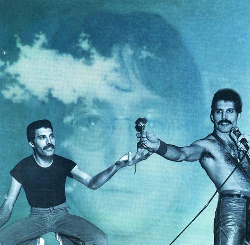 Freddie....♥