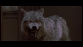 Fright Night wolf