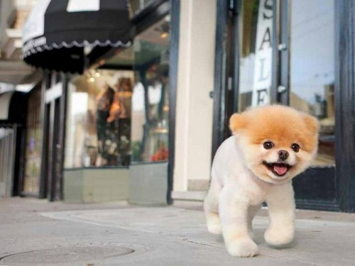 Little dog in big city!!!