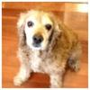 Dogs photo entitled My dog Mel