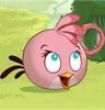 angry birds fotografia called rosa, -de-rosa Bird