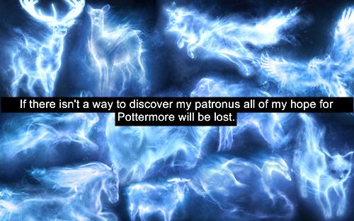 पॉटर्मोर Confessions