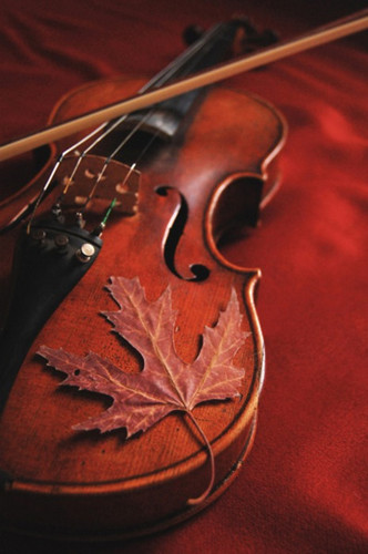 Violin  - music Photo