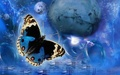 blue butterfly - blue photo