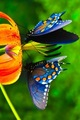 butterflies - butterflies photo